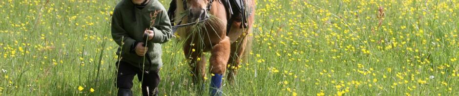 équestre-cheval-bievre-isere