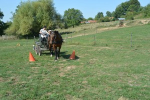Stage d'attelage - galop 1/2